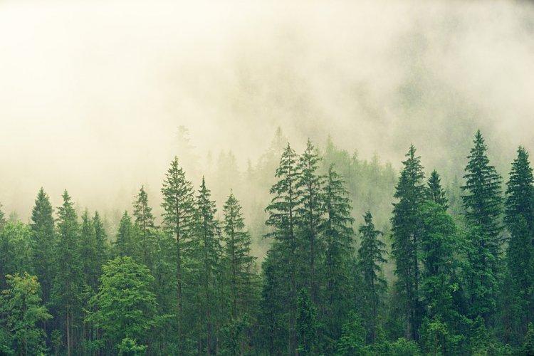Lietuvos miškų ateitį spręs Nacionalinis miškų susitarimas: sieks suderinti skirtingus visuomenės grupių poreikius