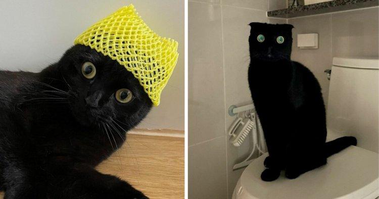 Juoda nulėpausė Miaundži: ne katė, o išdykęs stebuklas